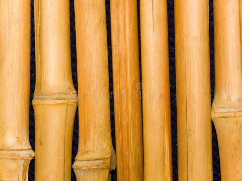 bambusowi drzewni bagażniki obraz royalty free