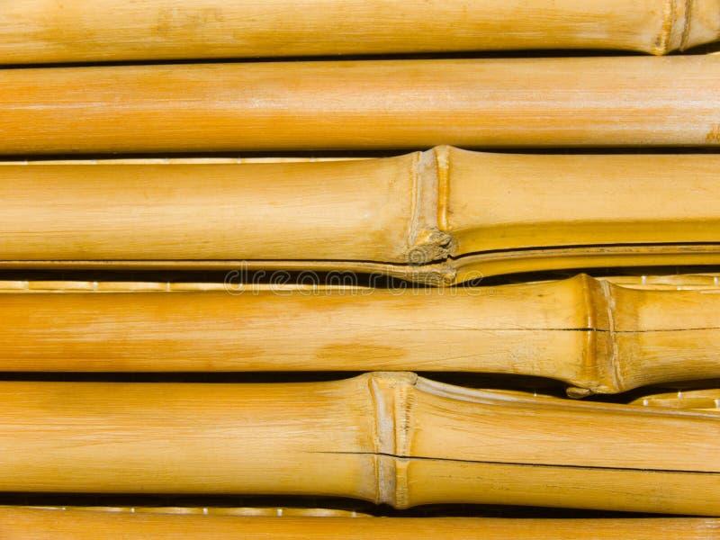 bambusowi drzewni bagażniki zdjęcia stock