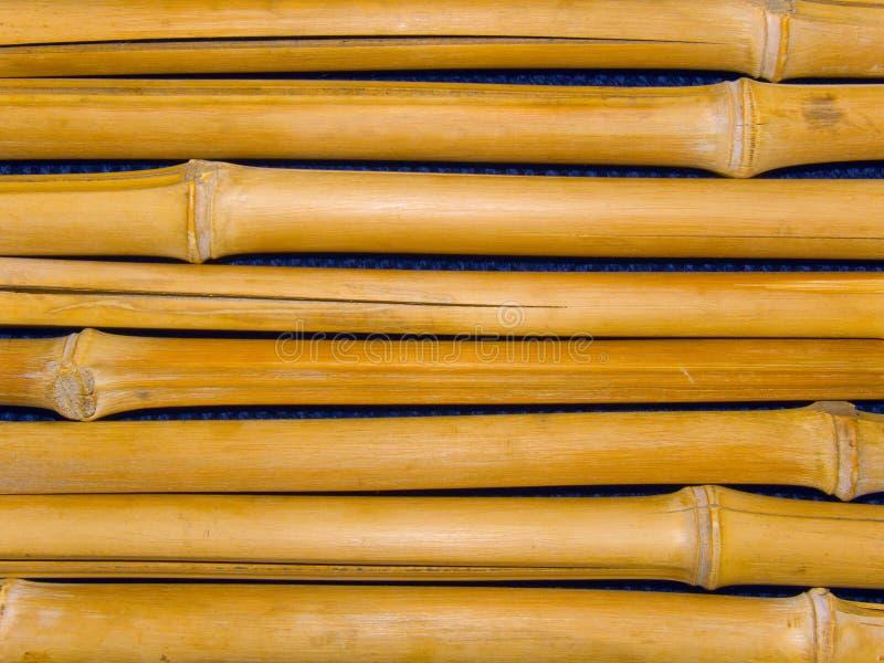 bambusowi drzewni bagażniki zdjęcie royalty free