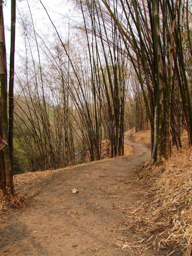 Bambusowi lasy fotografia stock