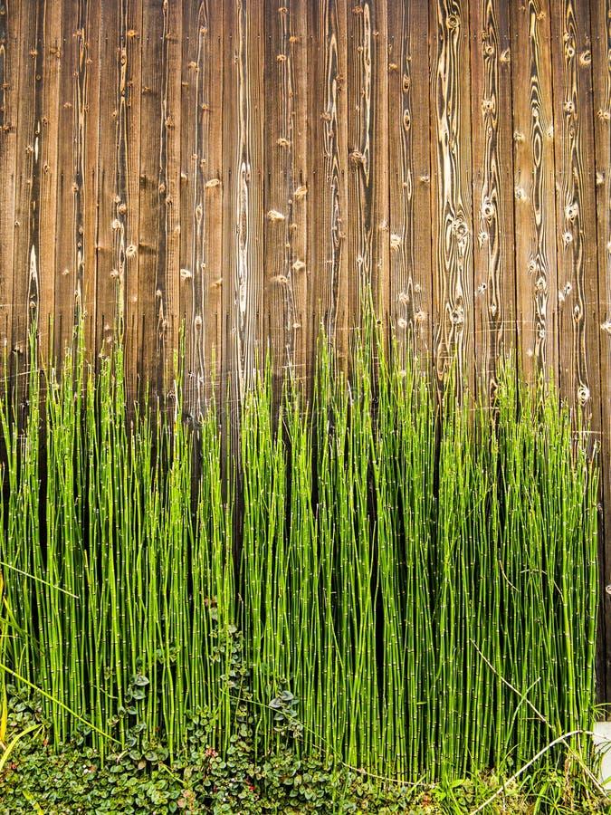 Bambusowi strzały na drewnie obrazy royalty free