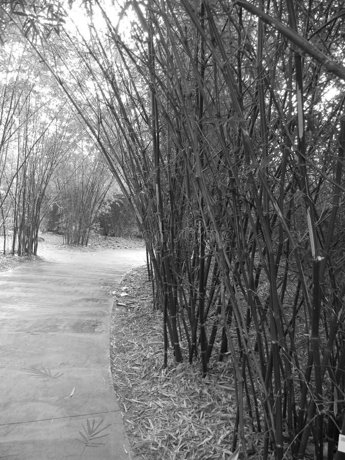Bambusowy ślad obraz stock