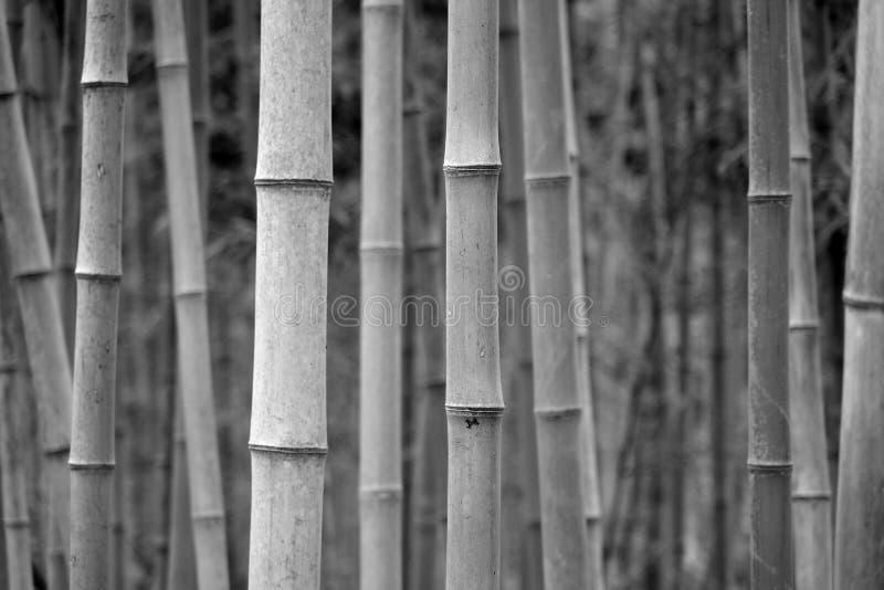 bambusowy czarny biel zdjęcia royalty free