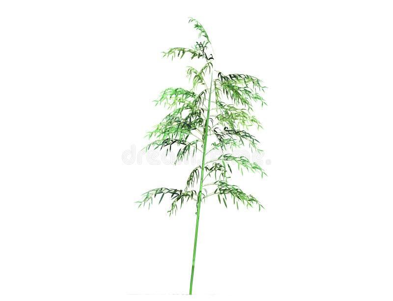 Bambusowy drzewo odizolowywający nad białym tłem royalty ilustracja