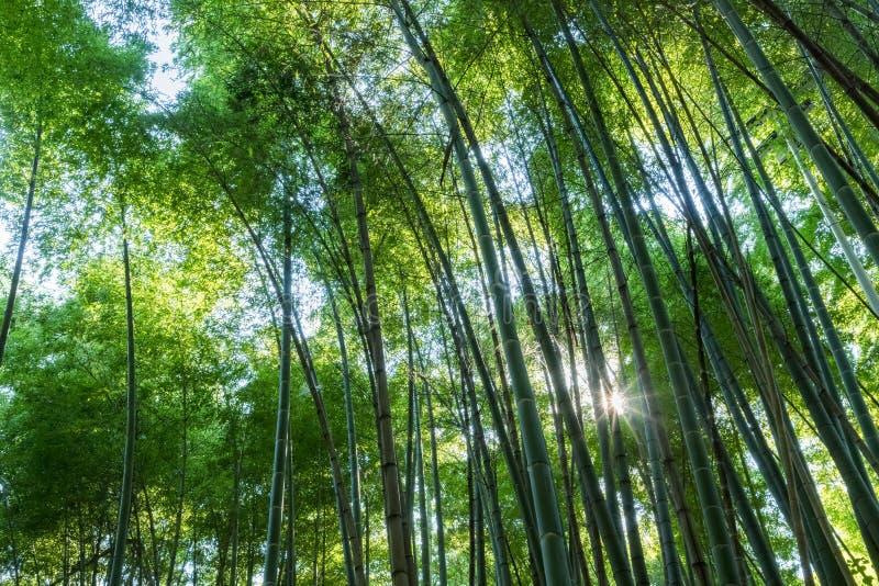 Bambusowy gaj i światło słoneczne obraz stock