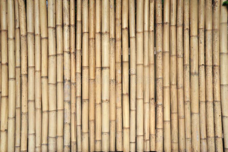 bambusowy kołczan zdjęcie stock