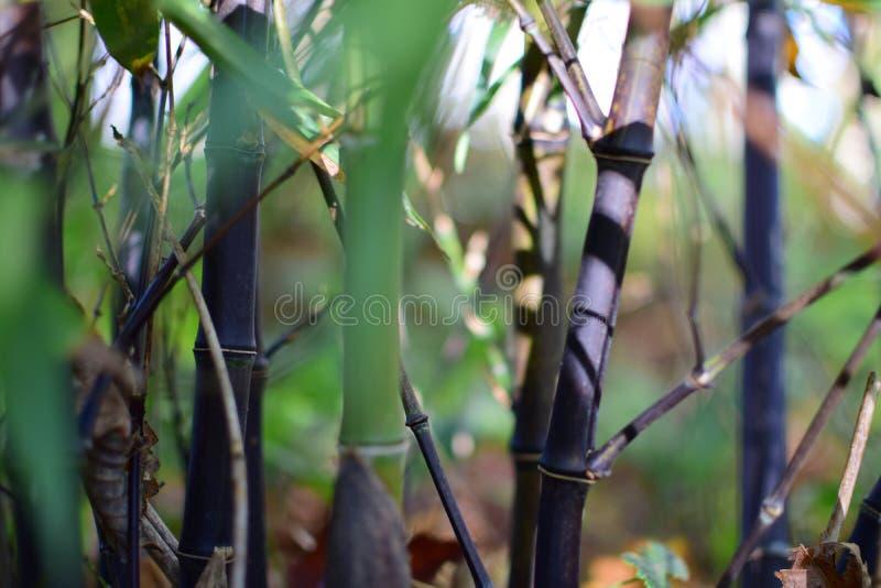 Bambusowy kręcenia czerń obrazy stock
