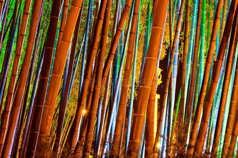 Bambusowy las zdjęcie stock