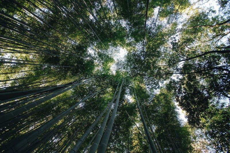 Bambusowy las jest naturalnym lasem lokalizować w Arashiyam bambus obraz royalty free
