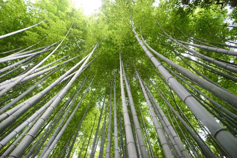 bambusowy lasowy Kyoto zdjęcie stock
