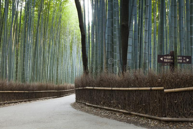 Bambusowy Lasowy Sagano Kyoto Japonia obraz royalty free