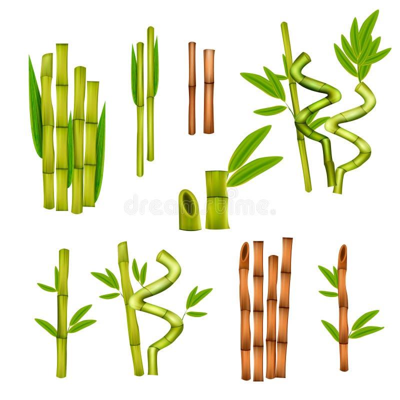 Bambusowy Realistyczny set royalty ilustracja