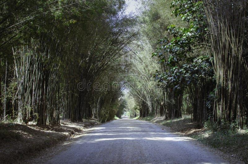 Bambusowy tunelowy throughway zdjęcia royalty free
