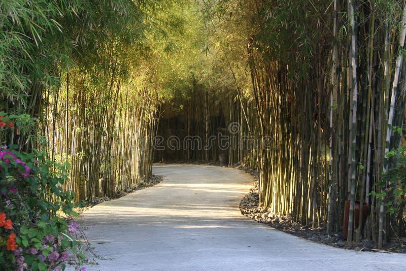 Bambuspfad stockfotos