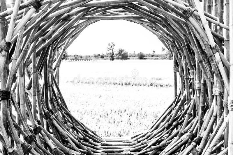 Bambusrahmen Hölzerne Stockfahnen von runden Formen Reisfeld-Frühlingssommer des rustikalen BambuszeichenBilderrahmen-Grüns schön lizenzfreie stockfotos