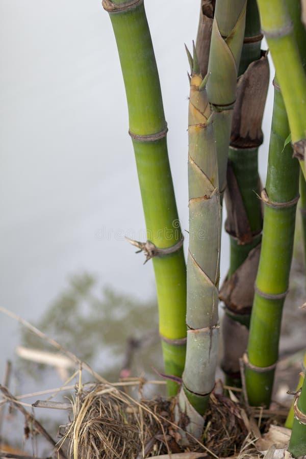 Bambusschoß auf dem Kanal bei Thailand stockbild