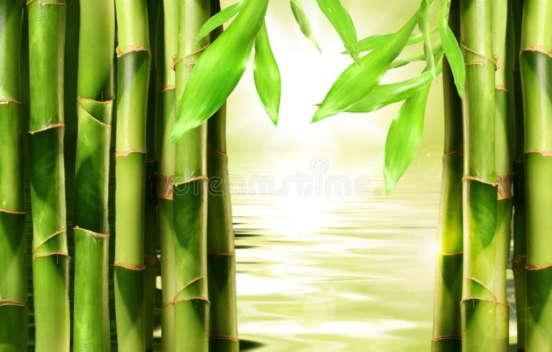 Bambusschosse mit Wasser lizenzfreies stockfoto
