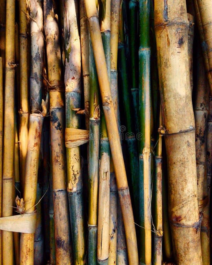bambusse stockfotografie