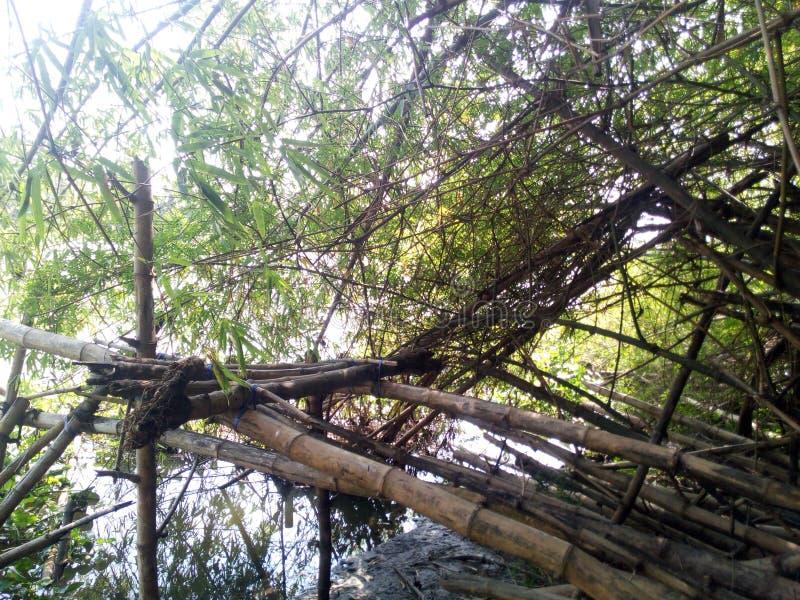 Bambussitz lizenzfreie stockfotografie