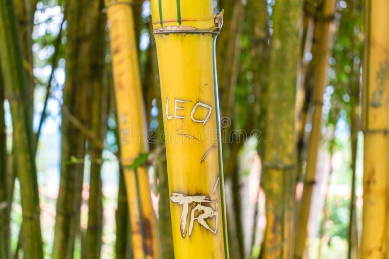 Bambusstamm mit gekritzeltem Aufkleber im tropischen Park lizenzfreie stockfotos