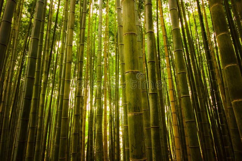 Bambusstummel im Wald in Kyoto, Japan verzaubernder Wald des schönen Bambusses lizenzfreie stockfotografie
