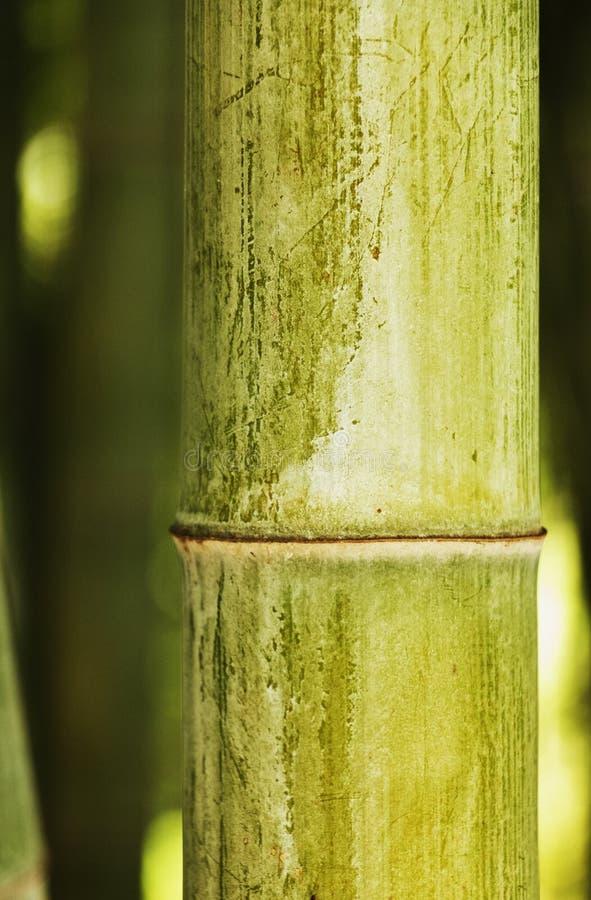 Bambustjälknärbild arkivbilder