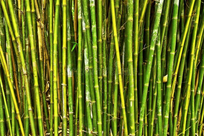 Bambuswald stockfotos