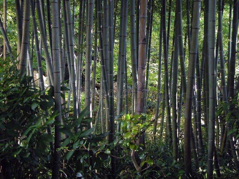 Bambuswald stockfotografie