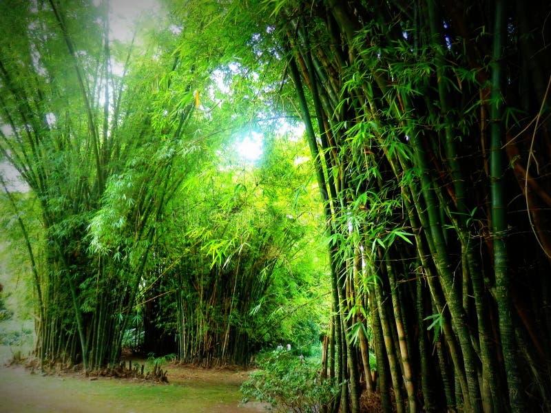 Bambuswald im japanischen Garten lizenzfreies stockfoto