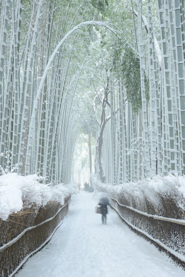 Bambuswald im Schnee lizenzfreies stockbild