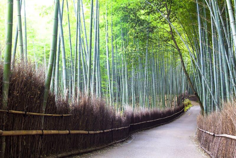 Bambuswald in Kyoto, Japan. stockfotos