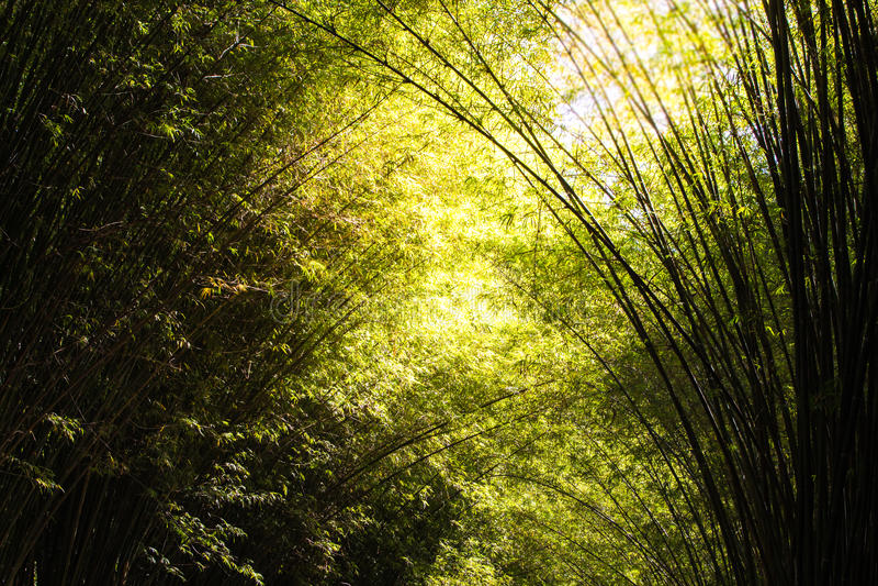 Bambuswald oder Waldung Beautyful lizenzfreies stockbild