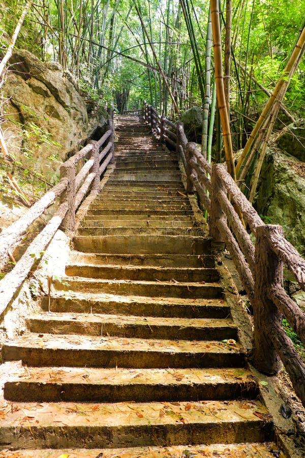 Bambuswald und Treppe stockfotografie