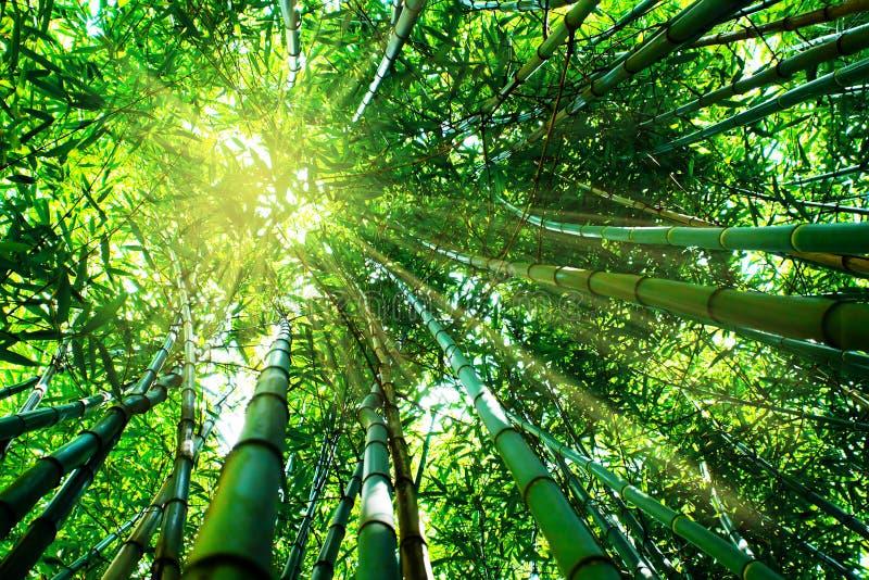 Bambuswaldung lizenzfreies stockfoto