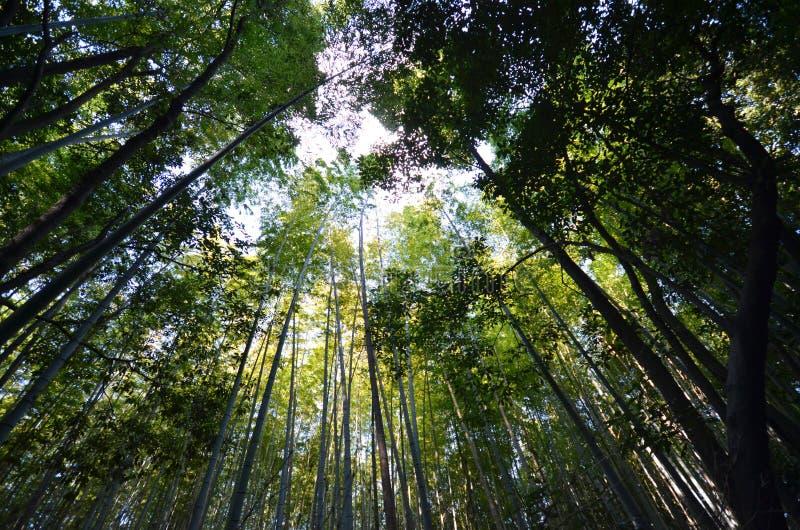 Bambuswaldung, Bambuswald bei Arashiyama, Kyoto lizenzfreie stockfotografie