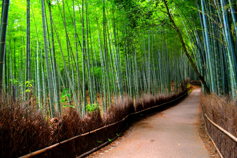 Bambuswaldung in Kyoto, Japan stockfoto