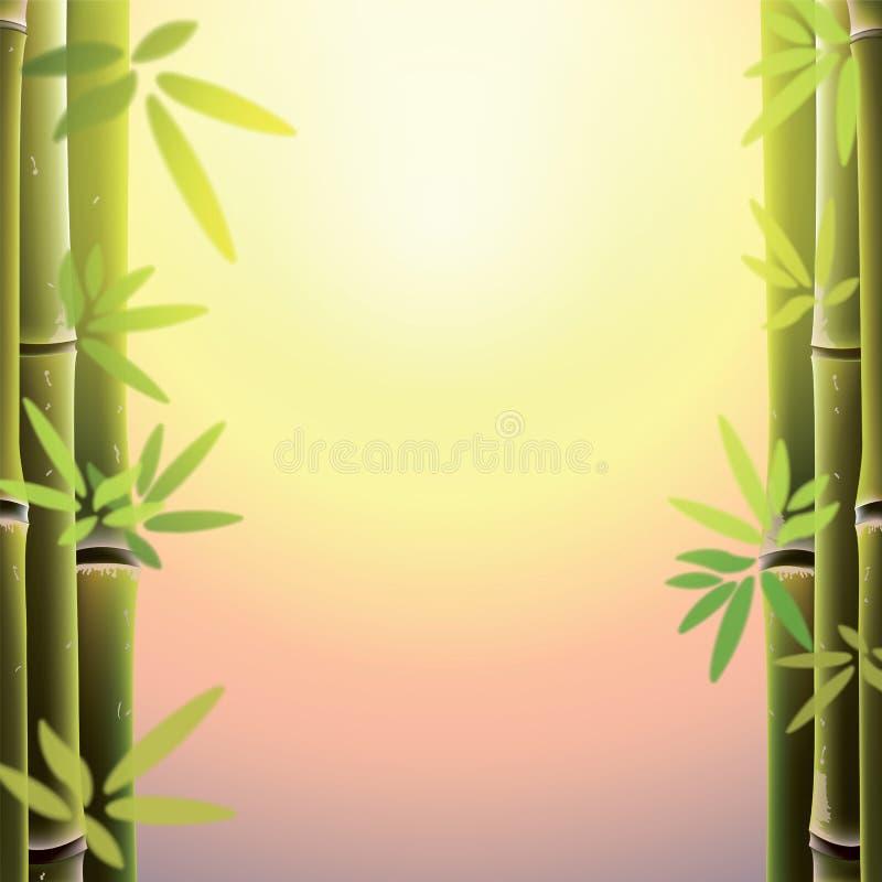 Bambuträd och sidor på solnedgångtid royaltyfri illustrationer