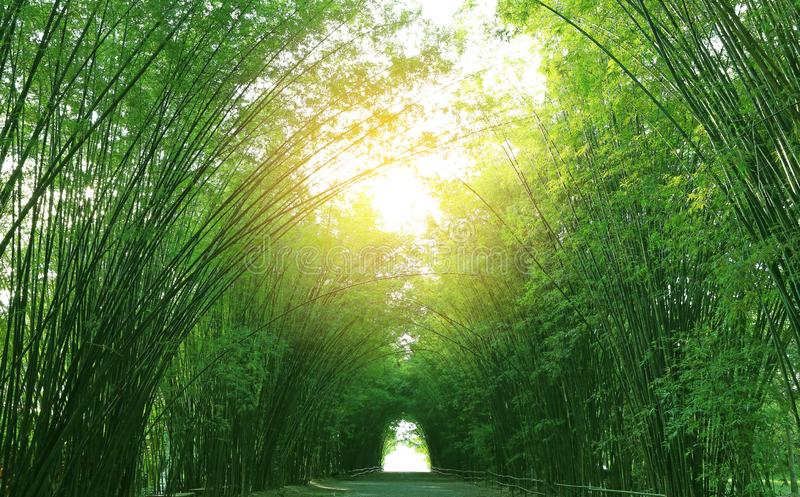 Bambutunnel och gångbana i natur med solljus igenom royaltyfri foto