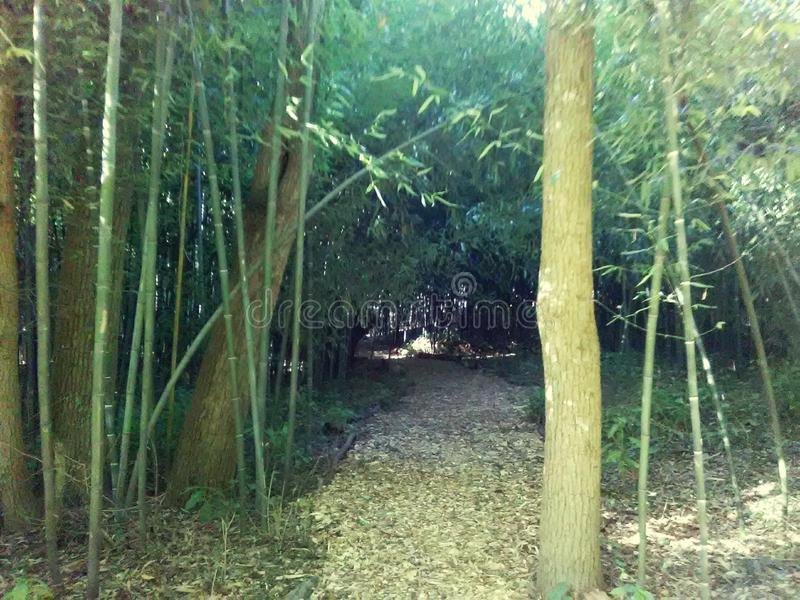 Bambuväg arkivfoton