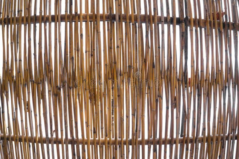Bambuvägg i himlen royaltyfria bilder