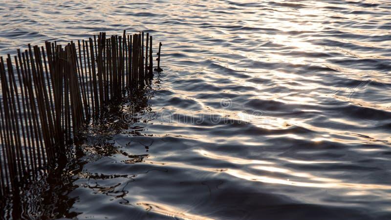 Bambuväggar med ljusa vågor royaltyfria foton