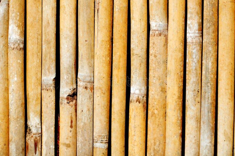 Bambuväggar textur, texturer för bladbambuvägg och bakgrunder arkivfoto