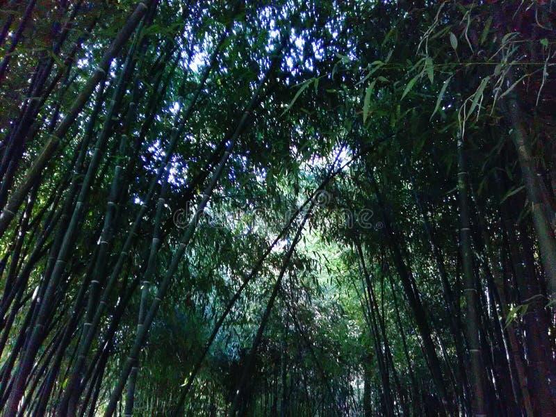 Bambuvärld royaltyfri foto