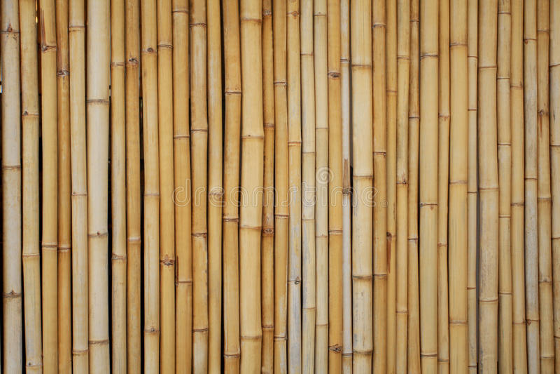 bambuyellow royaltyfri foto