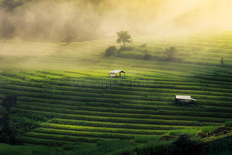 Ban Pa Pong Piang, the most beautiful rice terraces stock photo