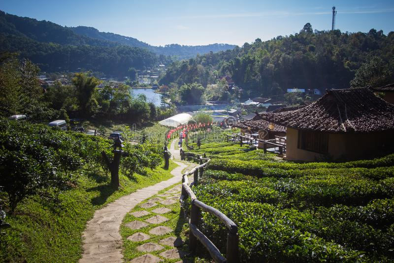 Earthen buildings and U-Long tea plantations at Ban Rak Thai Village,near Thai-Myanmar border,Mae Hong Son province,Northern Thail royalty free stock photo