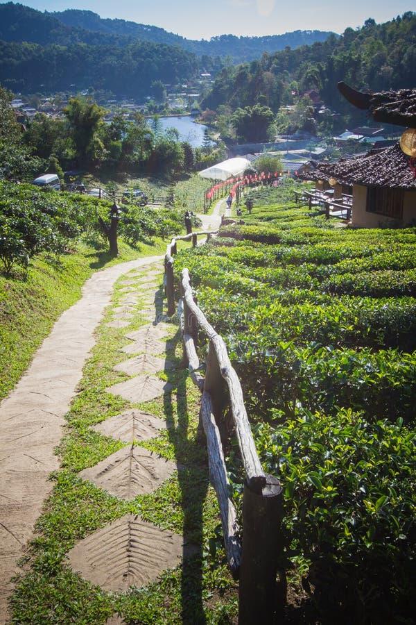 Earthen buildings and U-Long tea plantations at Ban Rak Thai Village,near Thai-Myanmar border,Mae Hong Son province,Northern Thail stock images