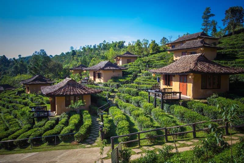 Earthen buildings and U-Long tea plantations at Ban Rak Thai Village,near Thai-Myanmar border,Mae Hong Son province,Northern Thail stock photos
