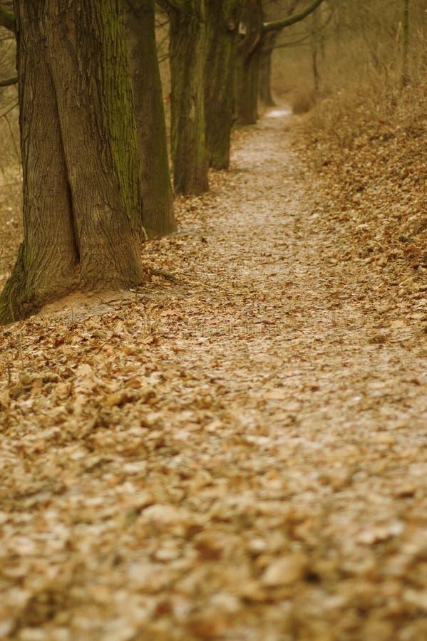 Download Bana fotografering för bildbyråer. Bild av tree, vila, lövverk - 500297