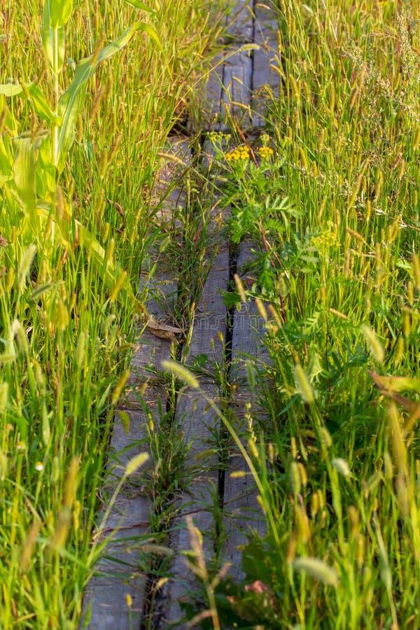 Bana av bräden i gräset i natur fotografering för bildbyråer